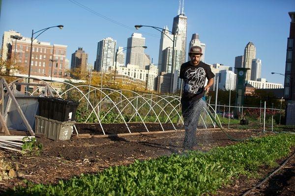 Ogrody społeczne, farmy miejskie, uprawy roslin jadalnych w budynkach czyli miejskie ogrodnictwo XXI wieku.